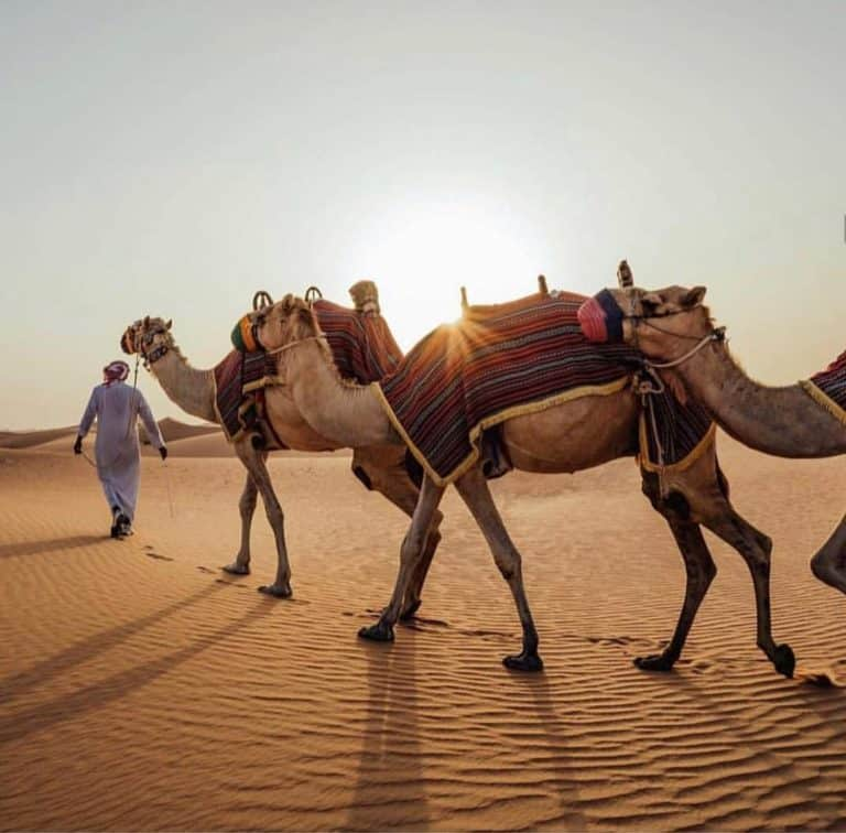 Top 5 Best Doha Tours For Every Type Of Traveler