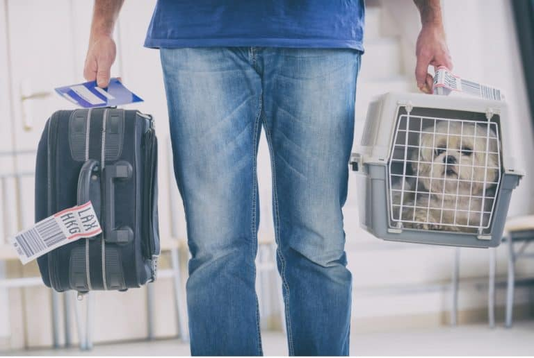 Can Dogs Fly On Qatar Airways?